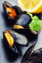 Mussels group of boiled in shells Stock Images