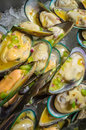 Mussels Served on Ice Royalty Free Stock Photo
