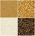 Mustard, coffee, rice and corn backgrounds Royalty Free Stock Photography