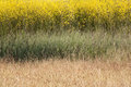 Mustard Field Abstract Royalty Free Stock Images
