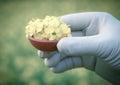 Mustard Flowers Outdoor