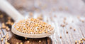 Mustard Seeds on a cooking Spoon Royalty Free Stock Photo