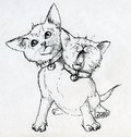 Mutant kitten with two heads headed one head calmly looks up other head yawns very cute little pet wearing collars bells ink drawn Stock Image