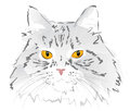Muzzle gray cat Royalty Free Stock Photography