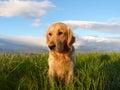 My dog Royalty Free Stock Photography