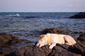 My dog is on the rocks and the beach beautiful Royalty Free Stock Image