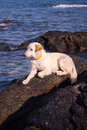 My dog is on the rocks and the beach beautiful Royalty Free Stock Photos