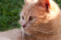 My little cute cat look at something looking Royalty Free Stock Photo