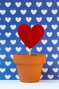 My love for you is growing, blue background Royalty Free Stock Photo