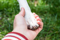 My true friend human hand holding dog paw Royalty Free Stock Photo