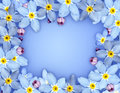 Myosotis forget me not blue flower frame Stock Images