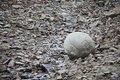 Mysterious boulders and pebbles of Champ Island Royalty Free Stock Photos