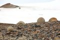 Mysterious boulders and pebbles of champ island franz jozef land stone spheres geodes Stock Images