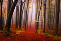 Mysterious foggy forest with a fairytale look during autumn Royalty Free Stock Photo