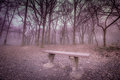 Mysterious forest empty bench in the foggy and misty Royalty Free Stock Images