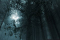 Mysterious forest foggy woods at dusk or night Royalty Free Stock Images