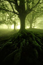 Mysterious forest with scary trees silhouettes Stock Images