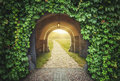 Mysterious gate sunny entrance.  New life concept Royalty Free Stock Photo