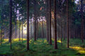 Mysterious morninglight in a forest Royalty Free Stock Images