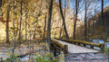 Mysterious Oirase Stream flowing through the autumn forest in To Royalty Free Stock Photo