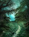 Mysterious pathway in the green magic forest Royalty Free Stock Photo