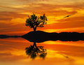The mysterious tree a in lake with a bird ia flat calm water orange Royalty Free Stock Photo