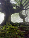 Mysterious And Twisted Trees