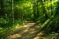 Mysterious Wooded Path Royalty Free Stock Photo