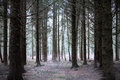 Mystery forest a foggy in winter Stock Images