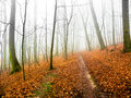 Mystery morning in autumn forest Stock Photography
