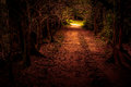Mystery path throw the woods tropical forest tunnel Stock Photography