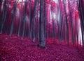 Mystic fantasy pink forest