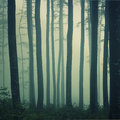 Mystic foggy beech forest Stock Photos