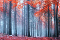 Mystic forest beautiful colorful foggy with magic light Stock Images