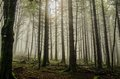 Mystic forest beautiful nature photography inside the fores in spain the fog is adding mysticle atmosphere in this otherwhise Stock Images