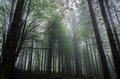 Mystic forest beautiful nature photography inside the fores in spain the fog is adding mysticle atmosphere in this otherwhise Stock Image