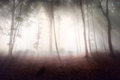 Mystic forest during a foggy day fairytale landscape with magic light Royalty Free Stock Photography