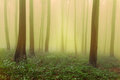 Mystic forest during a foggy day fairytale landscape with magic light Royalty Free Stock Image