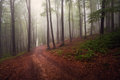 Mystic forest during a foggy day fairytale landscape with magic light Stock Photo