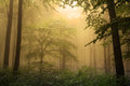 Mystic forest during a foggy day fairytale landscape with magic light Royalty Free Stock Photos