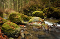 Mystic forest landscape water river in motion through the mountain rocks in Stock Image