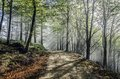 Mystic forest into the of navarra in spain Royalty Free Stock Photos