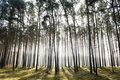 Mystic forest, sun rays Royalty Free Stock Photos