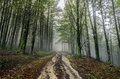 Mystic road beautiful nature photography inside the fores in spain the fog is adding mysticle atmosphere in this otherwhise boring Royalty Free Stock Photography
