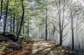 Mystic road beautiful nature photography inside the fores in spain the fog is adding mysticle atmosphere in this otherwhise boring Royalty Free Stock Photos