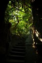 Mystic stairs in a jungle Royalty Free Stock Photo