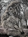 A mystic tree in the park - stylized to painting Royalty Free Stock Photo