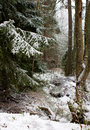 Mystic winter forest Royalty Free Stock Photography