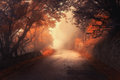 Mystical autumn red forest with road in fog Royalty Free Stock Photo
