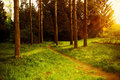 Mystical dense forest with footpath shimmering sunlight a Stock Photography